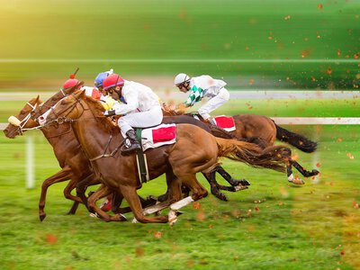 Statutory Inspection & Test: thoroughbred racing